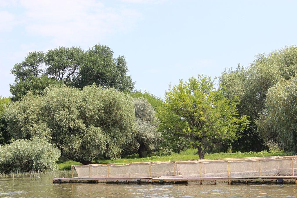 Осетровая ферма в Астрахани